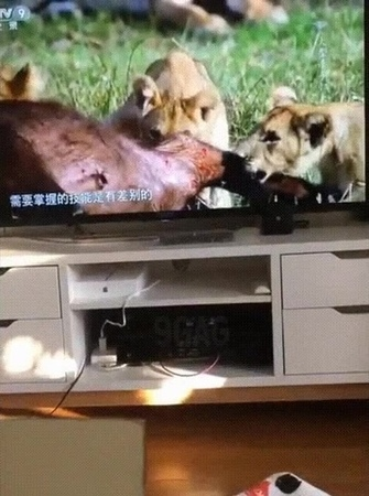 Обалдевший кот Glassy cat
