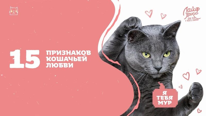 15 Признаков Кошачьей Любви — Лайфхаки Для Кошек | KOT