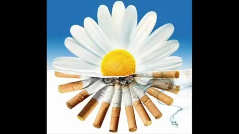 День без табака чистые легкие