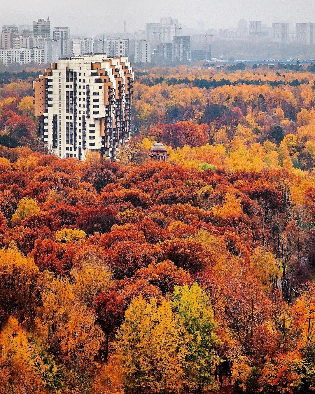 Химкинская осень горит и пылает   Фото -