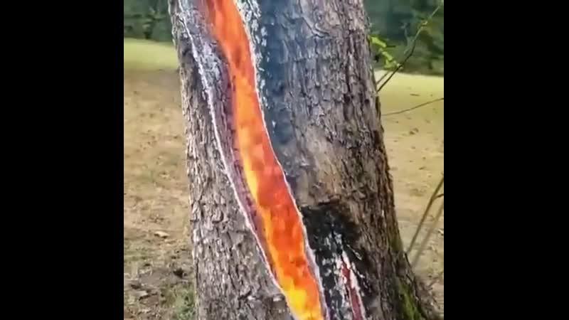 Дерево в огне после удара молнии
