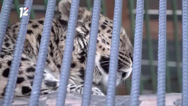 Телезрители 12 канала увидят обитателей Большереченского зоопарка не выходя из дома
