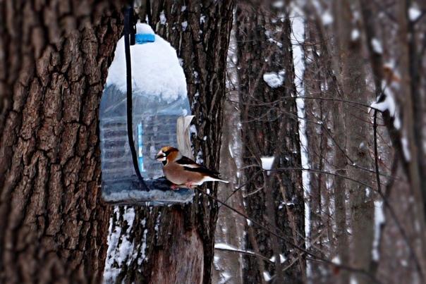 Чем нельзя кормить птиц